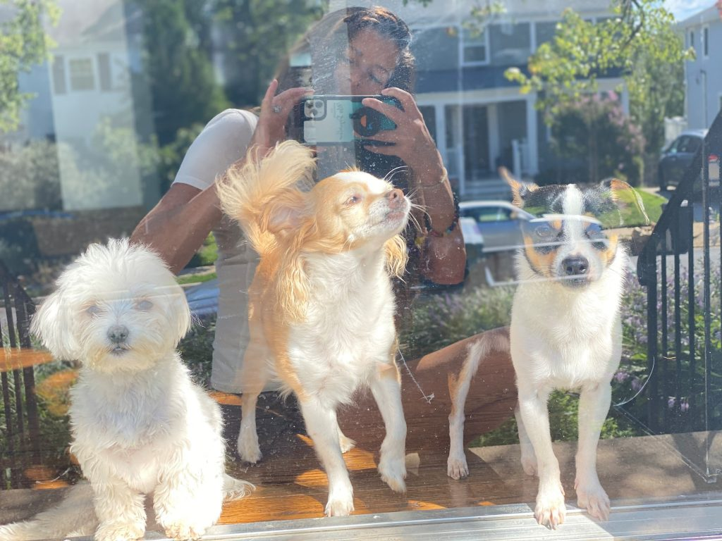 Woman taking picture from outside of her three dogs looking through glass door